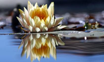 Internship Reflections – Tone Lewis